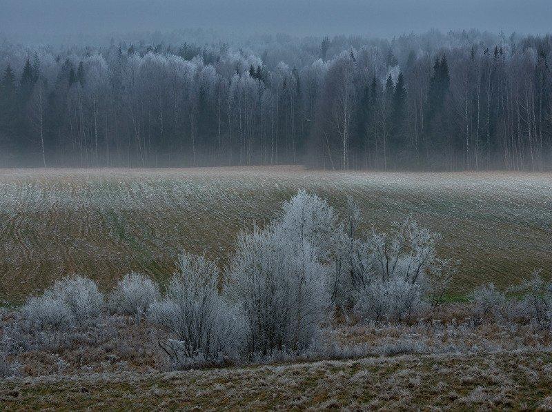 Фототуры с Владимиром Рябковым, изморозь, #topnature #russpasibo #magic_shots #lovelyRussia #sunset_vision #exclusive_sky  #exclusive_shots #loves_russia2 #photoarena_nature #nature_sultans #nature_perfection #rsa_sky #rsa_sunset #photorussia #rsa_naturep Ноябрьская изморозьphoto preview