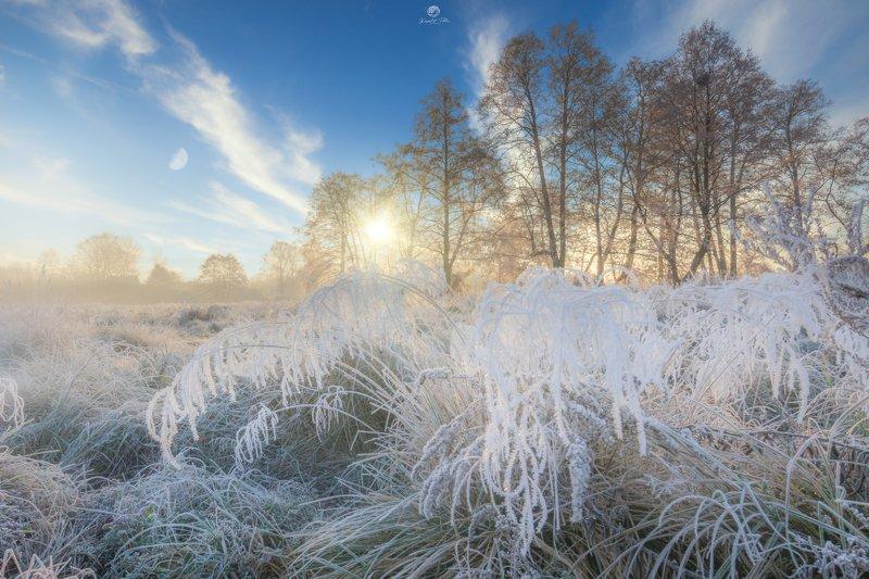 Zima, przymrozek, krajobraz, natura, słońce, księżyc, mgła, światło, poranek, chmury, drzewa, szron, nikon Winter moodphoto preview