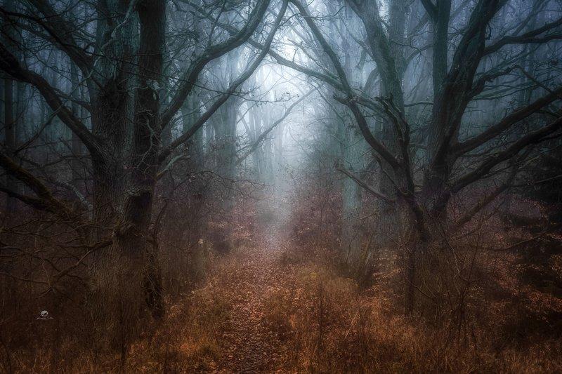 las, leśna droga, jesień, mgła, atmosfera, drzewa, liście jesienne, światło, nikon, świt Tajemnicza atmosfera z mgłą między drzewamiphoto preview