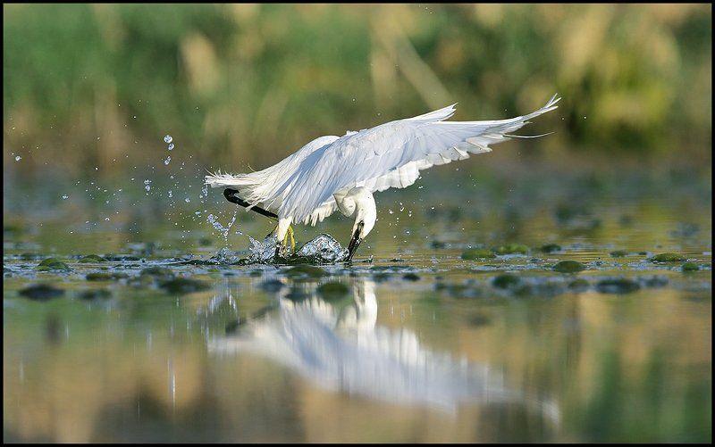 Белая охотницаphoto preview