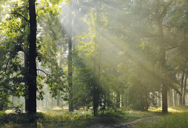 По утреннему лесуphoto preview