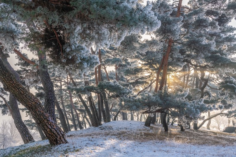 forest, winter, place, korea, trees, pine Frozen pine forest of namhangangphoto preview