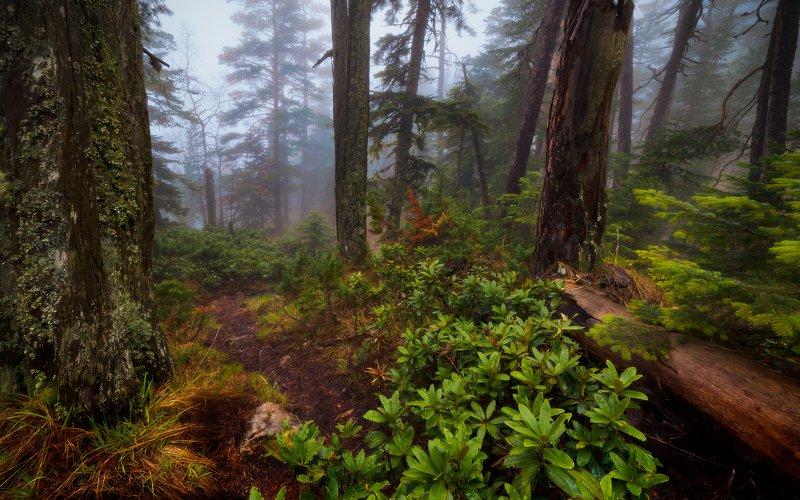 Лесной тропойphoto preview