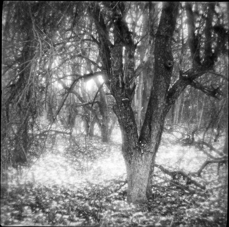 плёнка, medium format, чёрно-белое, monolens, природа, аналоговая, монокль, зима Старые яблони. Первый снег...photo preview