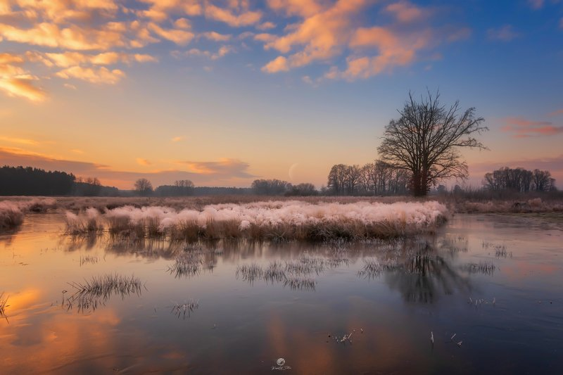 frost, reflection, water, sky, frost, landscape, december, nikon, sunrise, nature, forest, tree, moon, clouds December frostphoto preview