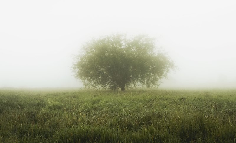 fog, tree, lonely tree, field, grasses, landscape, silence, morning, sky, light, nikon, atmosphere Silencephoto preview