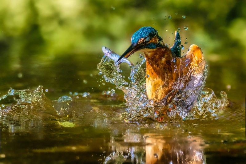 Kingfisherphoto preview