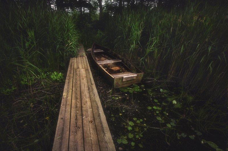 питер, луга, пейзаж Укромное местечко. . .photo preview