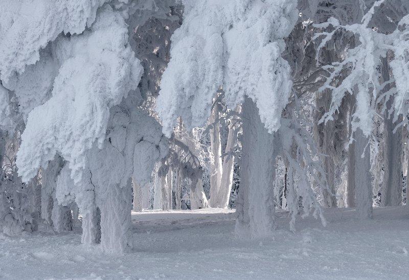 енисей, зима, изморозь. Сказка \