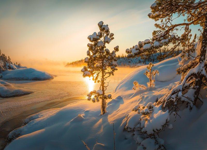 Ладожское озеро, Карелия, зима, снег, солнце, лёд, рассвет, сосна, дерево, солнце, вода, наледь, деревце, зимнее,  Золотое утроphoto preview