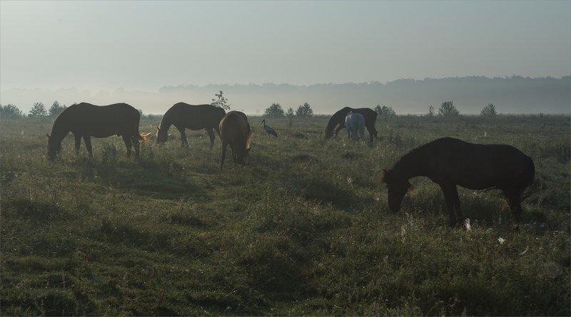 сельская прерия...photo preview