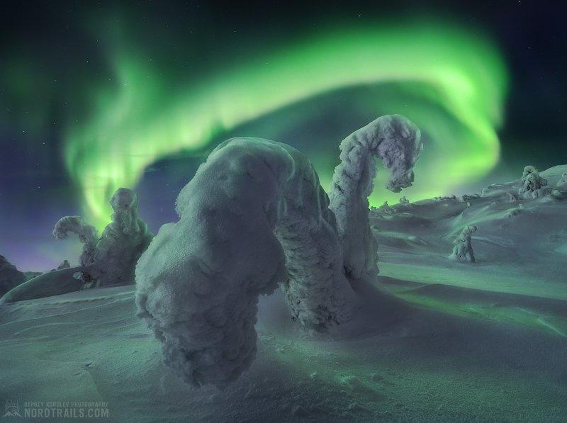 Зимние обитатели в изумрудном кольце Заполярьяphoto preview