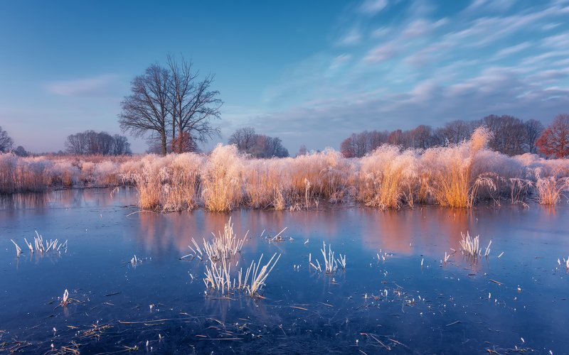 frost, reflection, water, sky, frost, landscape, december, nikon, sunrise, nature, forest, tree, clouds, atmosphere Winter colors of naturephoto preview