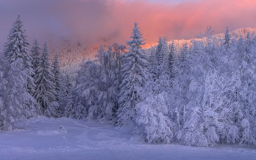 Winter, evening time