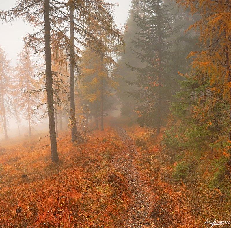 swiss Рыжая Осеньphoto preview