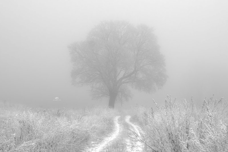 landscape, field, tree, aura, atmosphere, nature, winter, frost, rime, dirt road, light, silence Mysterious aura above the fieldsphoto preview