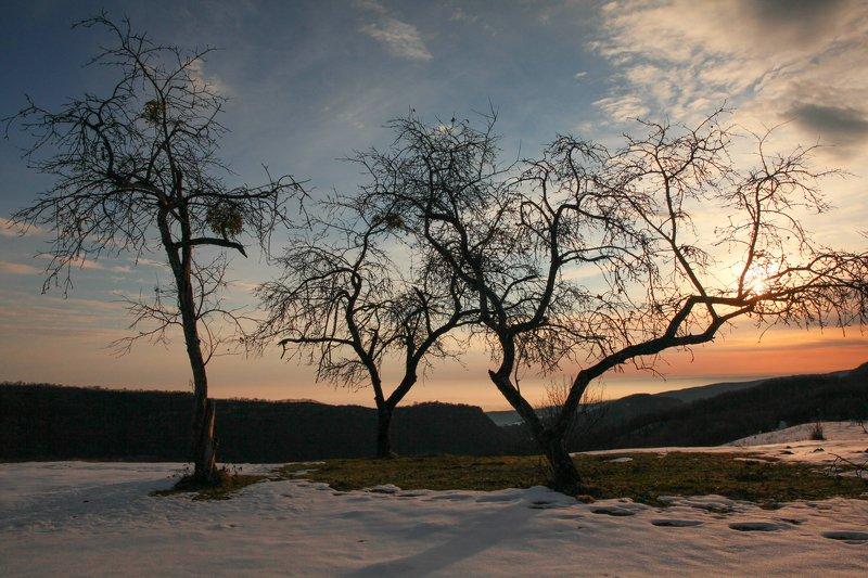 горы,рассвет,вершины,пейзаж,небо,деревья,дагестан,природа Три яблони..photo preview