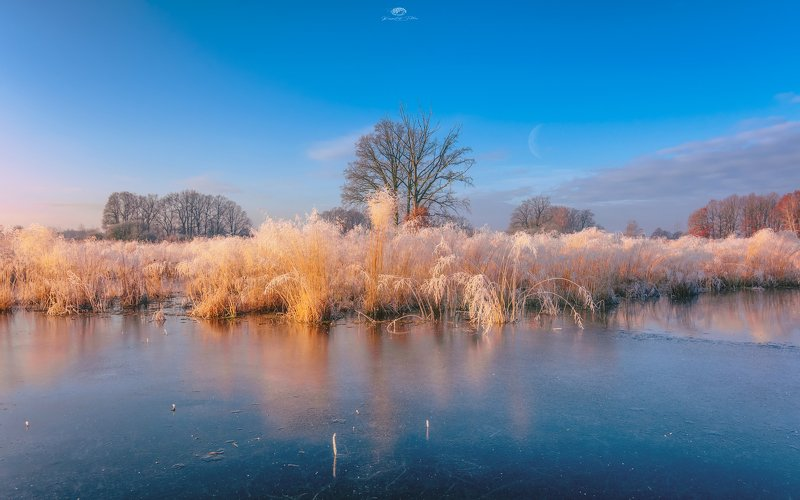 frost, reflection, water, sky, frost, landscape, december, nikon, sunrise, nature, forest, tree, clouds, atmosphere The wealth of naturephoto preview