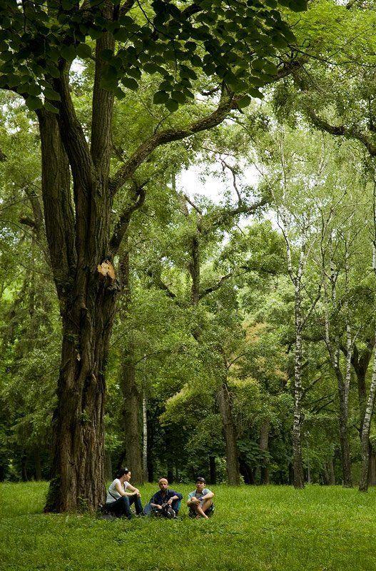 парк, город, чернигов, грибы грибы... :)photo preview