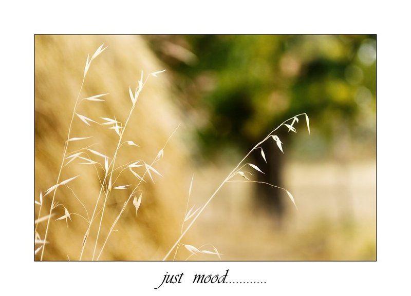 просто,так Just mood....photo preview