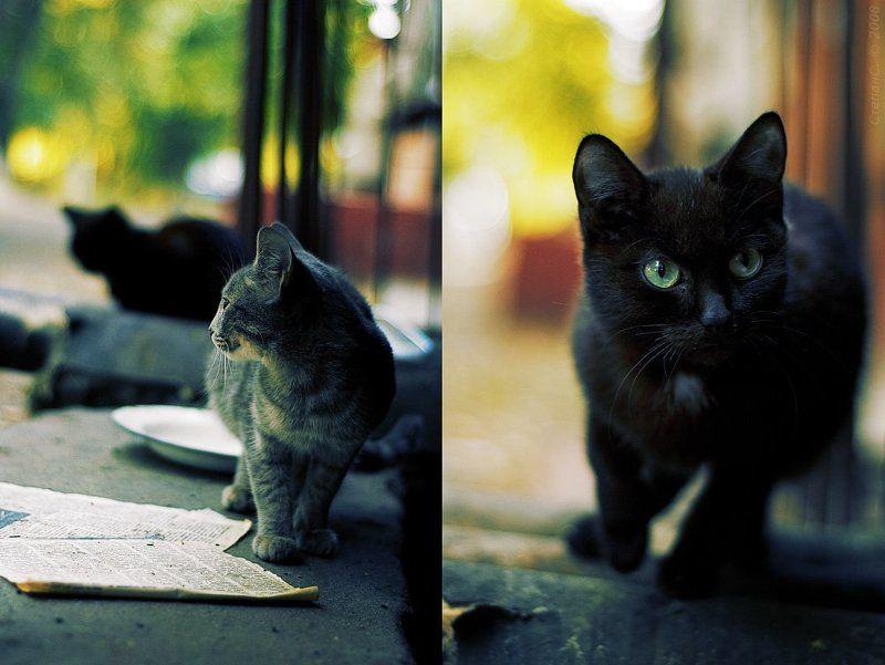 кот, кошка, коты, осень, *photo preview
