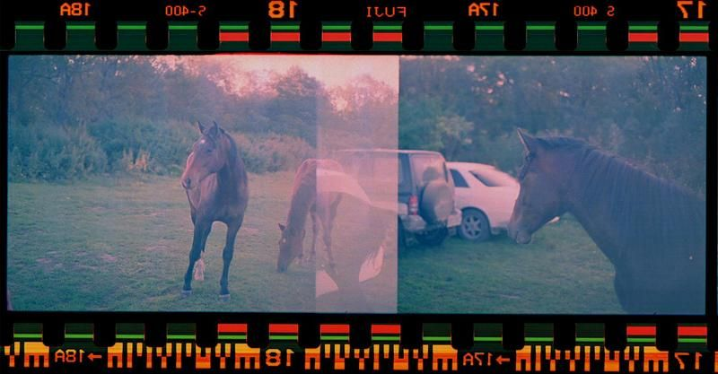 horse-car! horse!!photo preview