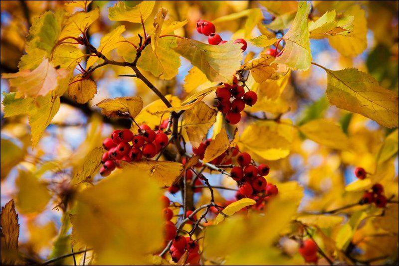 осень, москва, небо, листья, солнце, останкино Московская осеньphoto preview