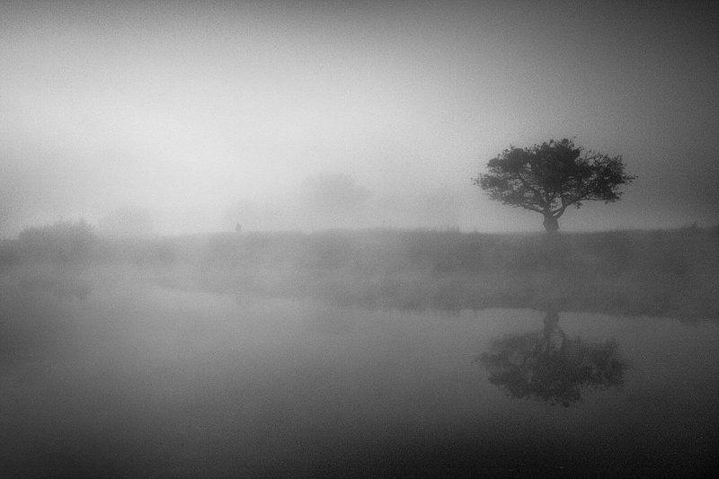 ежик, в, тумане Лошадка, ау....photo preview