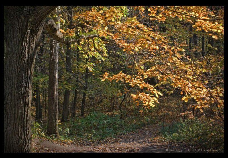 осень, лес, измайлово Калитка в осень...photo preview