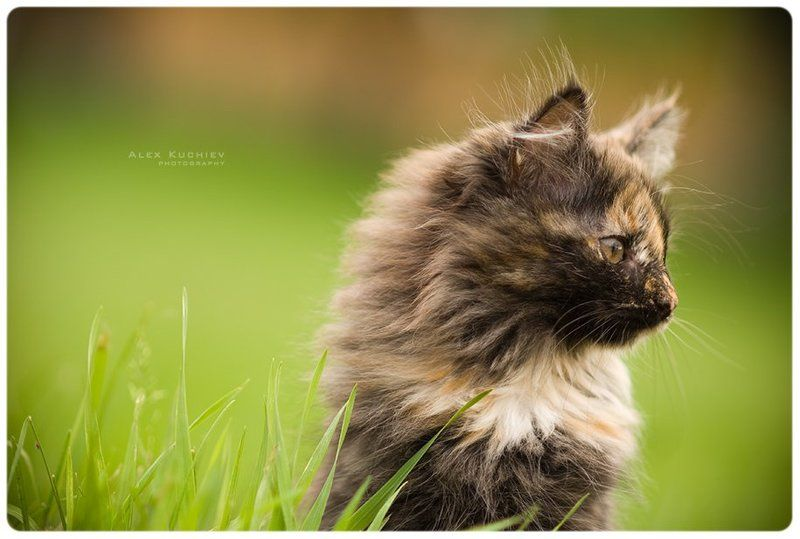 котенок, фото, мяу, nikon, d200 Мяуphoto preview