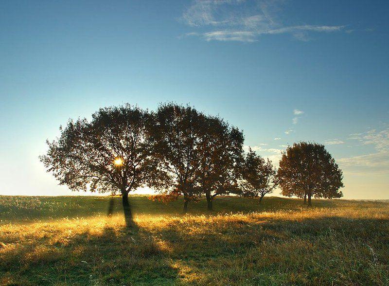 золотая, осень ***photo preview