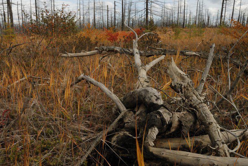 сахалин, осень, пейзаж Сахалин. Болотоphoto preview