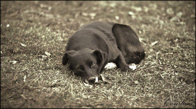 пёс, одиночество photo preview