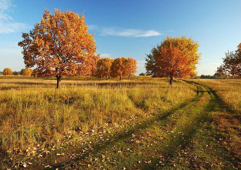 золотая, осень, ильдар, гилязов Осень продолжается...photo preview