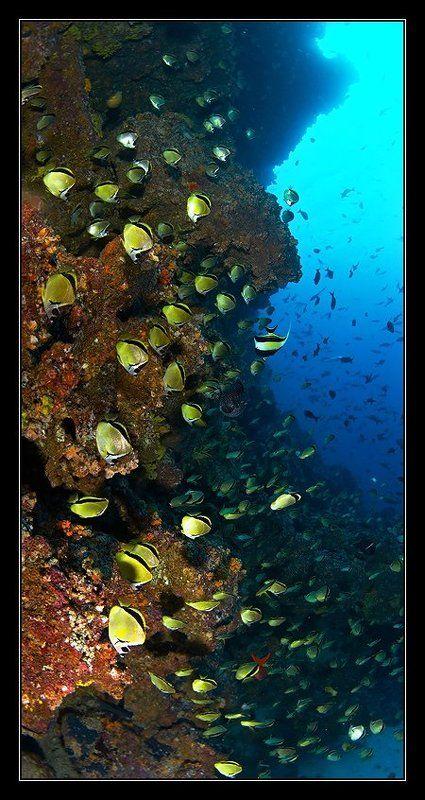 подводная зарисовкаphoto preview