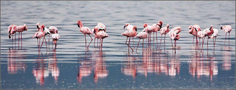 снова о фламинго..photo preview