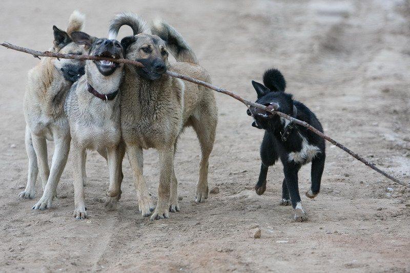 собака, животные Собачкиphoto preview