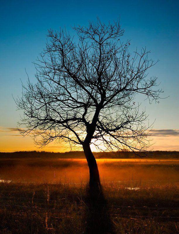 утро, туман, дерево, рассвет, ильдар, гилязов ***photo preview