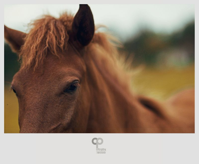 Animals, Brown, Friends, Horse Brown with friendsphoto preview