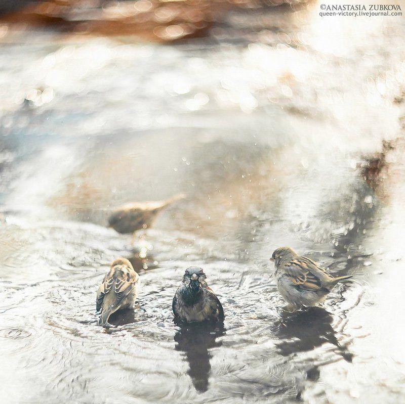Как воробушки купалисьphoto preview