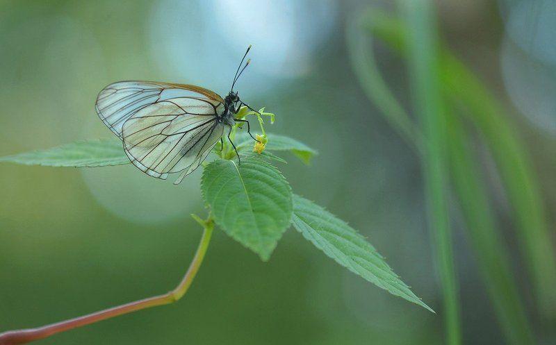 Под сенью трав, в тиши рассвета, Живой Цветок встречает летоphoto preview
