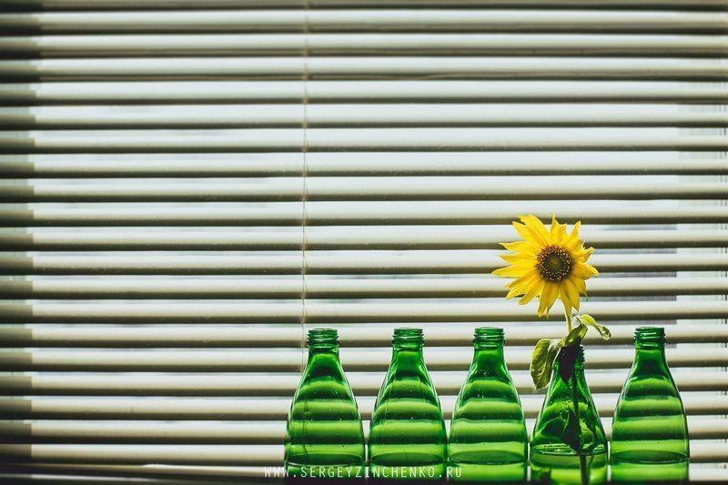 Sun Flowerphoto preview