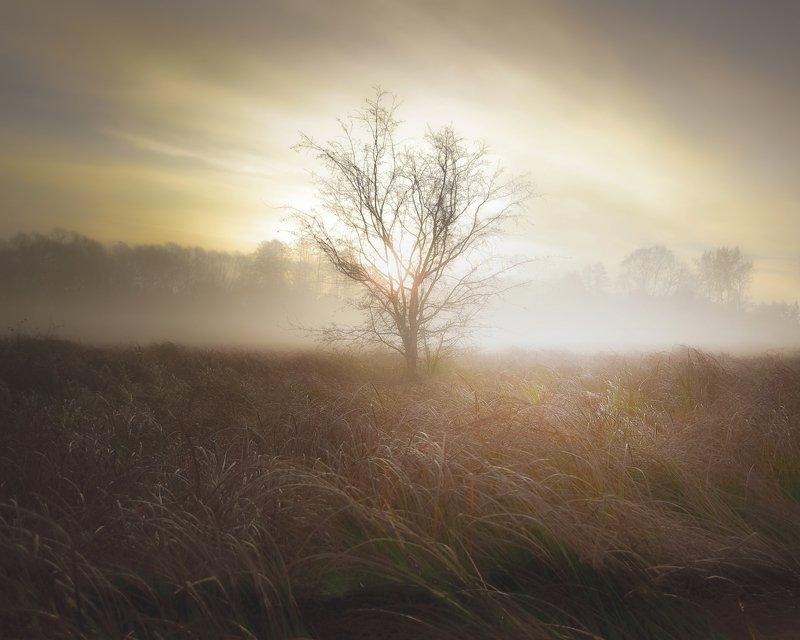 fog, atmosphere, whisper, words, autumn, dawn, light, landscape, nature, grass, sapling, nikon A whisper of wordsphoto preview