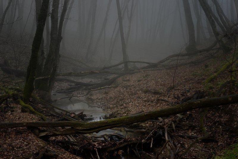 зима туман лес утро ручей Мрачное утроphoto preview