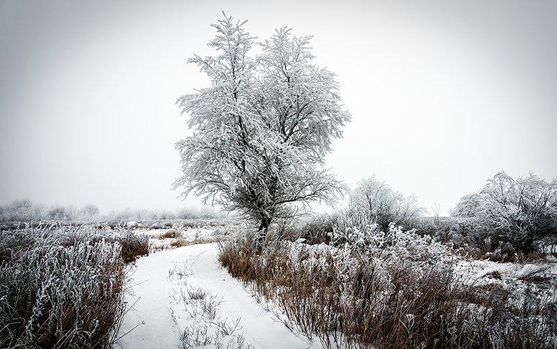 зима, дорога, мороз, дерево, иней, холод, пейзаж Зимняя дорогаphoto preview