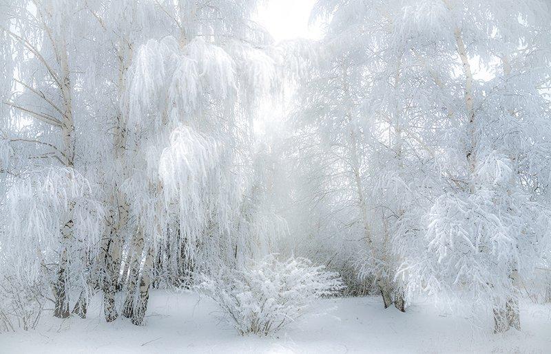 зима, солнце, мороз, дерево, иней, холод, пейзаж, берёзы, солнечные лучи Зимняя сказкаphoto preview