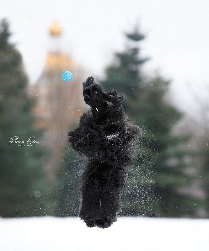 прыжок мяч зима снег игры красиво Ирджик Блэк Бой photo preview
