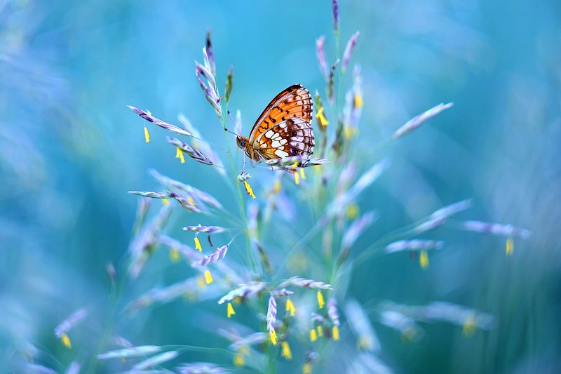 макро, бабочка, ветер, лето, butterfly, wind, macro, summer Как хрупко равновесие в пространстве...photo preview