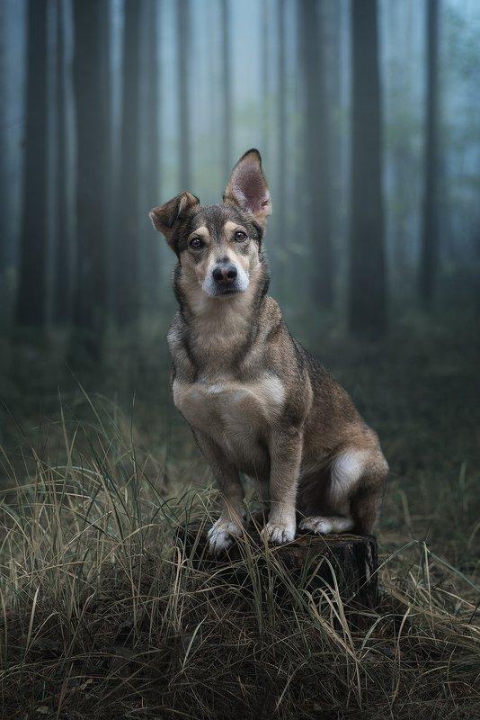собака Уокерphoto preview