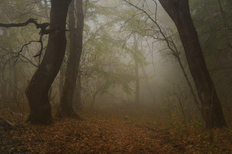 осень листва утро лес туман Прошедшая осеньphoto preview